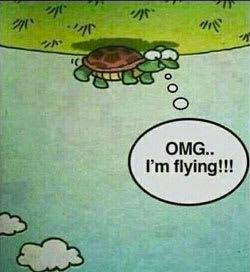 A happy turtle Photo