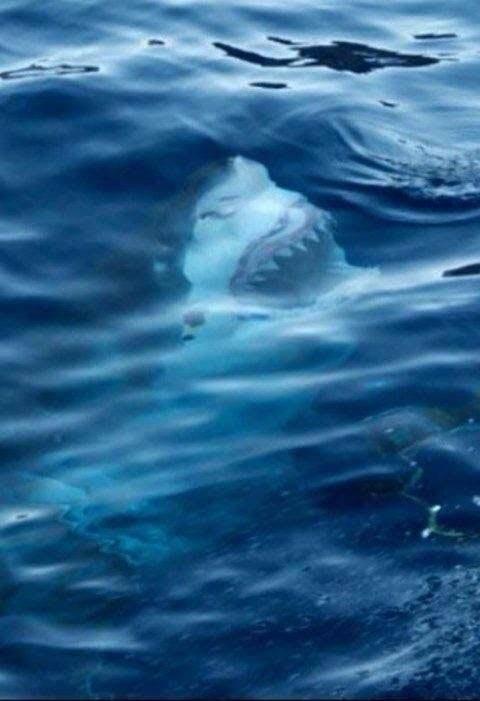 Shark!?