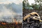 Brazilian president fires Amazonian...