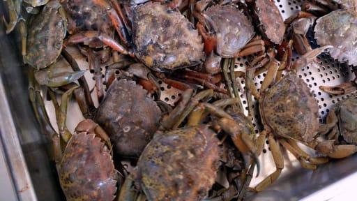 Proportions et grammages des fruits de mer