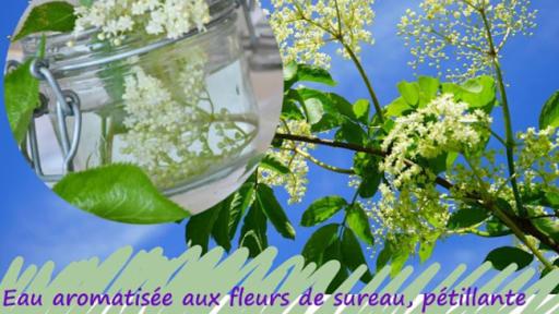 Boisson Rafraichissante Aux Fleurs De Sureau Petillante Recette
