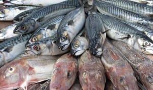 Conseils d'achat du poisson