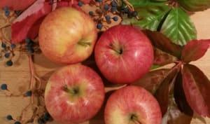 Tarte aux pommes sur fond de confiture de raisins
