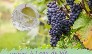 Raisins à l'eau de vie
