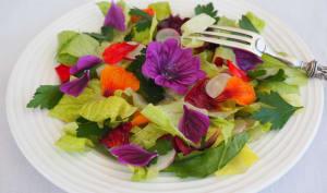 Salade de fleurs comestibles