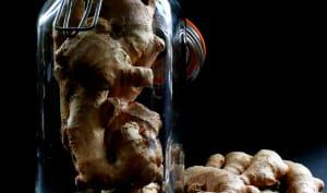 Rhum arrangé au gingembre