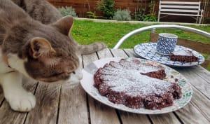 Gâteau au chocolat à 50 calorie la part