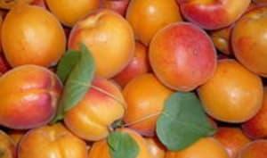 Coulis de fruits jaunes
