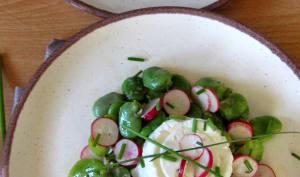 Salade de fèves, radis roses et fromage en faisselle