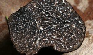 Truffe noire en coupe