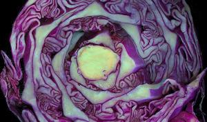 Chou violet