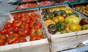 Assortiment de tomates en cageots
