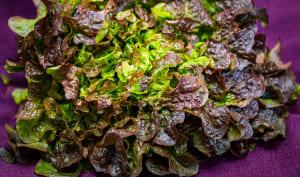 Salade entière feuille de chêne