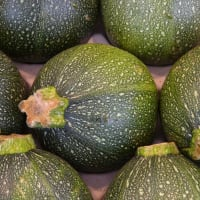 courgettes rondes