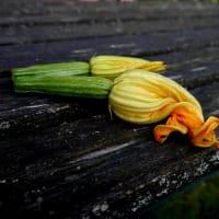 beignet de fleur de courgette