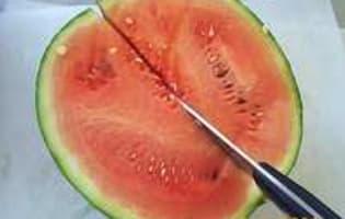 Pastèque et melon - Etape 2