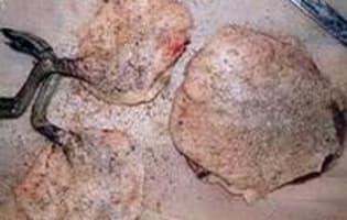 Sarcelle aux airelles sauce porto  - Etape 3