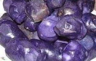 La pomme de terre Vitelotte - Etape 1