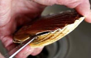 Ouvrir et décoquiller une coquille Saint Jacques - Etape 4