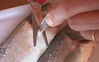 Ecailler et habiller un poisson rond - Etape 1