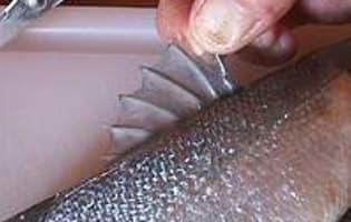 Ecailler et habiller un poisson rond - Etape 2