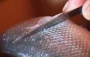 Ecailler et habiller un poisson rond - Etape 7