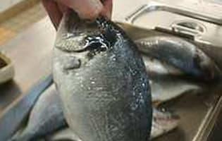 Griller un poisson entier - Etape 2