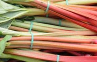 Rhubarbe rôtie - Etape 1