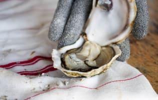 Ouvrir les huîtres facilement - Etape 7