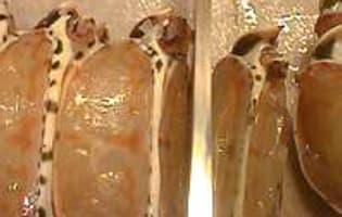 Médaillons de langouste sautés au beurre moussant  - Etape 3