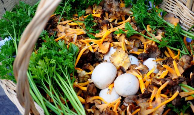 Panier de champignons de cueillette