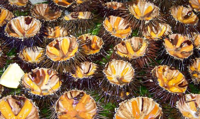Oursins