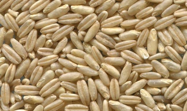 Avoine graines