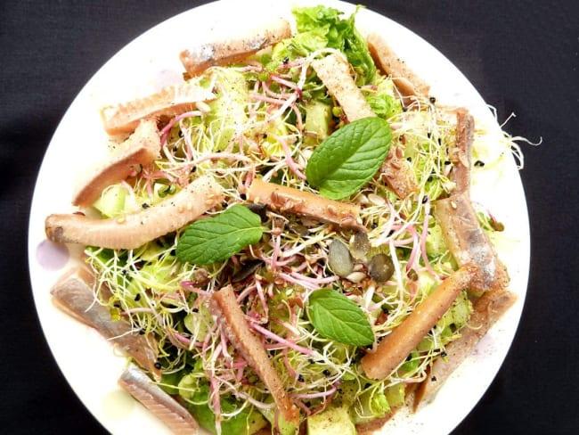 Salade Printanière au Hareng