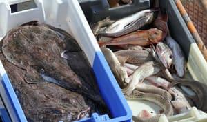 Saisonnalité des poissons et fruits de mer