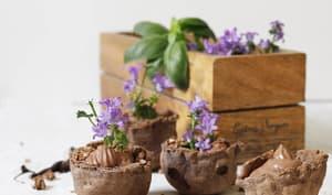 Mousse et muesli croustillant au chocolat