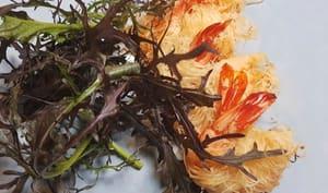 Crevettes en pâte de Kadaïf au citron confit