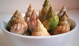 Caricoles ou escargots de mer