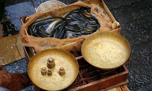 Anguilles sur le marché