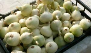 Caisse remplie d'oignons blancs
