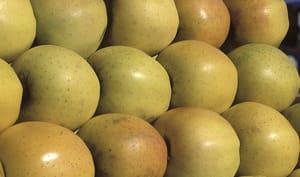 Pommes golden sur un étal
