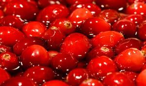 Cranberries en vrac
