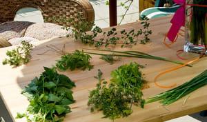 Herbes aromatiques sur plan de travail