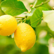 Ala Lemon