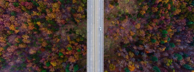 Herbstwald mit Straße