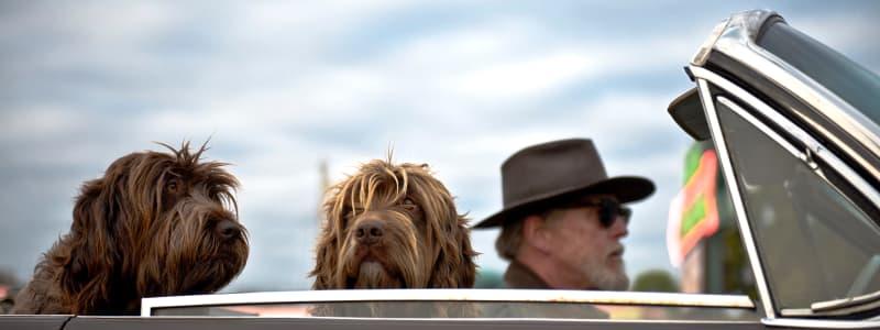 Mit bester Sorge für Ihren Hund und Schutz: das sind die besten Transportmöglichkeiten