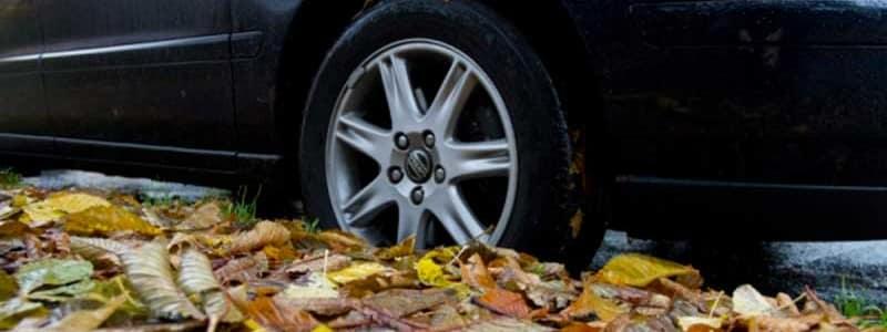 Pas på når bladene falder - vejen bliver glat.