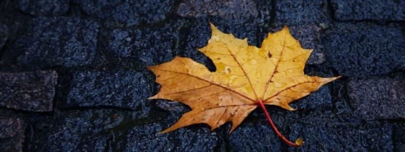 Husk at gøre din bil klar til efteråret