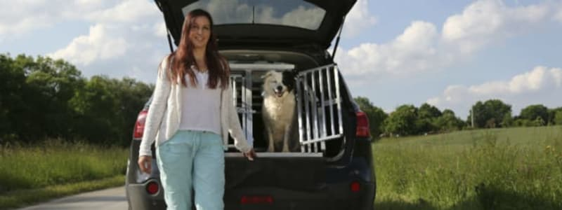 Take your dog with you in the car - in a safe way