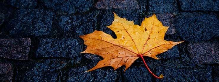 Für Autofahrer bedeutet Herbst vor allem nasse und rutschige Straßen